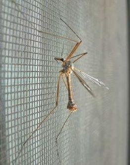 Sieťky proti hmyzu